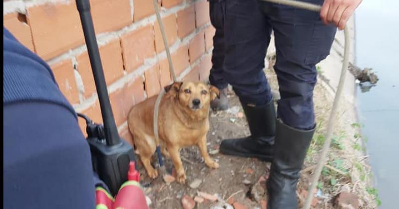 El perrito estaba en la intersección de Falucho en Lamadrid